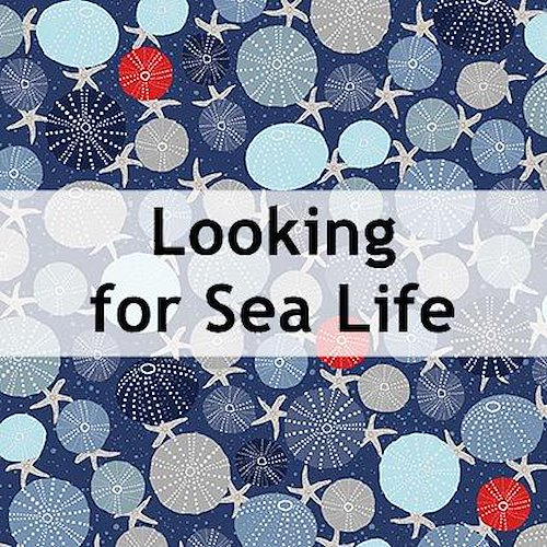Looking for Sea Life