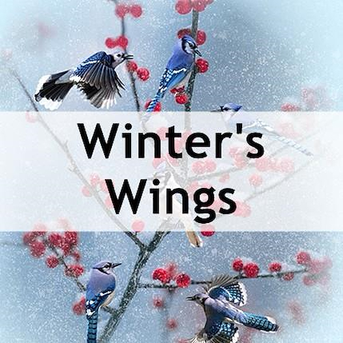 Winter's Wings