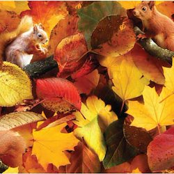 Autumn Squirrels - Sheeting